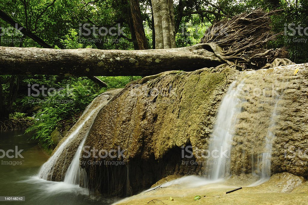 Topple tree with Waterfall royalty-free stock photo