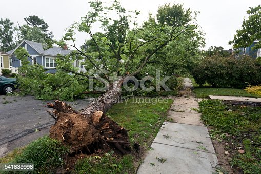 Toppled tree on residential street due to violent Virginia windstorm thunderstorm. Horizontal.