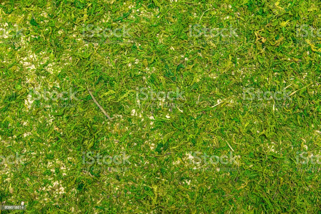 Topview, mossy floor or forest moss ground, natural green background stock photo