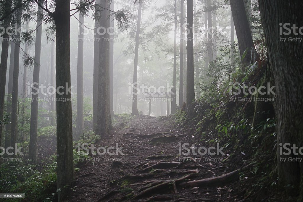 Torii in the forest stock photo
