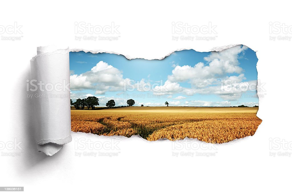 Torn paper over a summer wheat field landscape stock photo