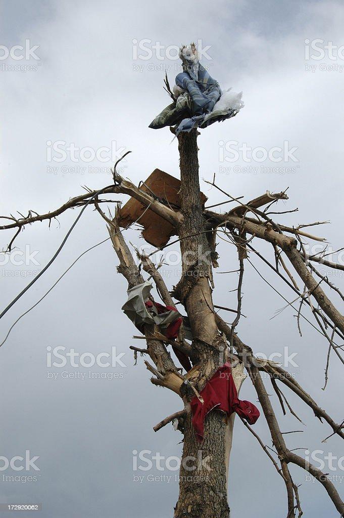 Торнадо дерево Стоковые фото Стоковая фотография