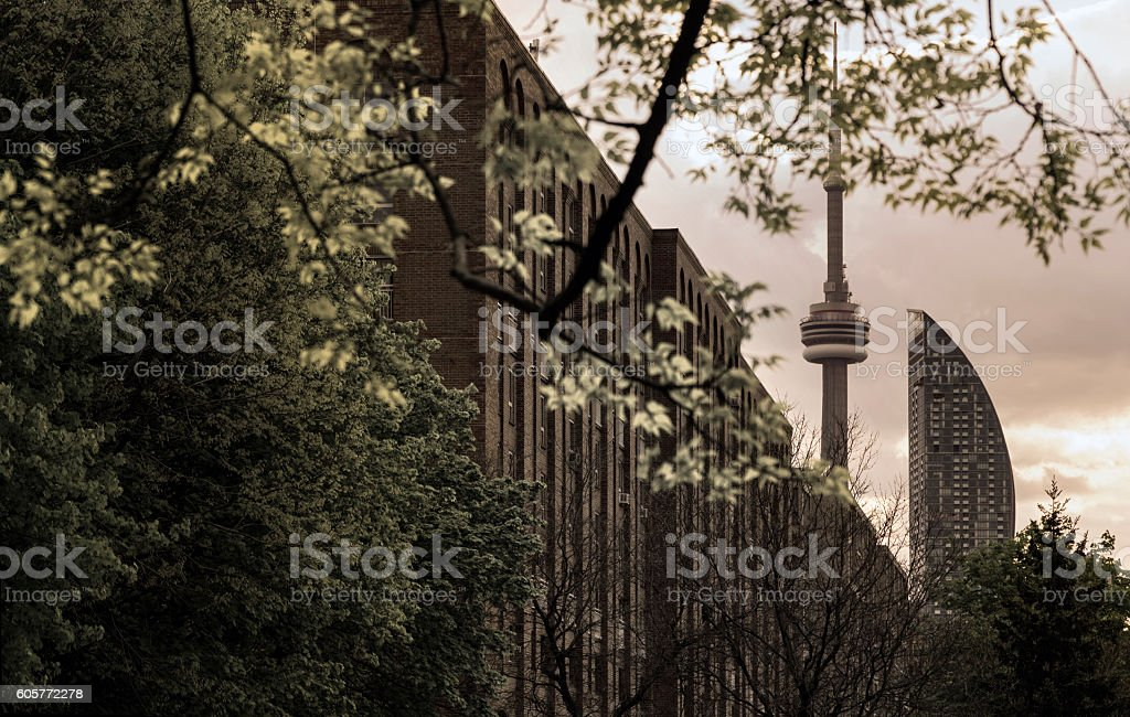 Toronto City and CN Tower view from a park stock photo