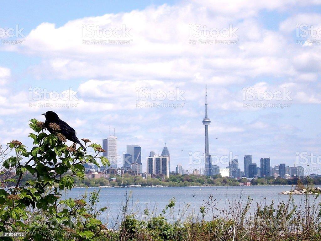 Toronto Lake panorama from Humber Bay 2008 stock photo