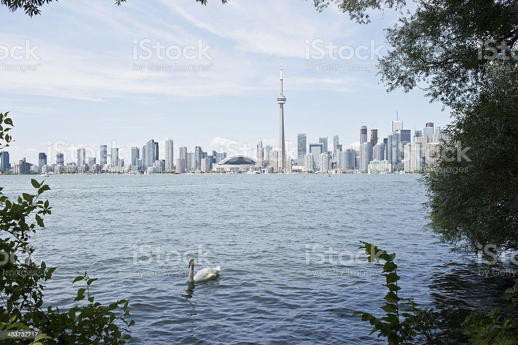 Toronto - Royalty-free Animal Wildlife Stock Photo