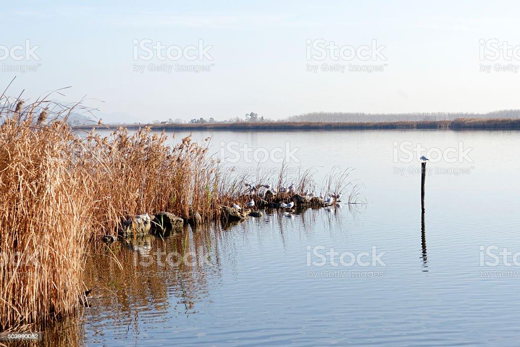 torre del lago stock photo