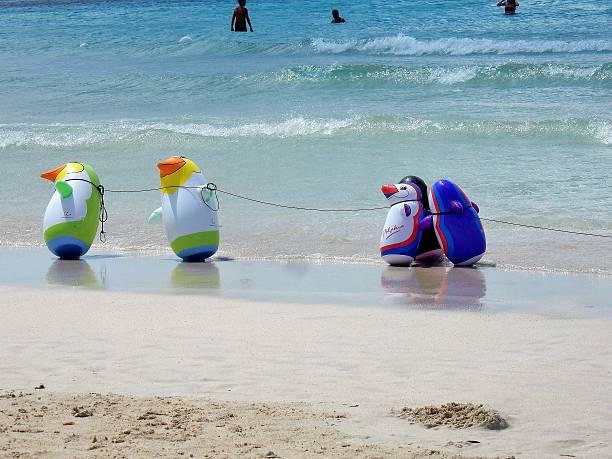 torre lapillo - pinguini in riva al mare - ambulante foto e immagini stock