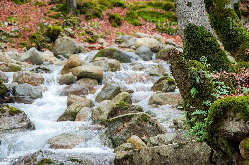 torrent en automne stock photo