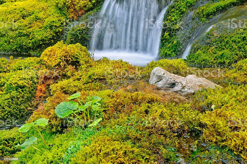 Torrente alpino royalty-free stock photo