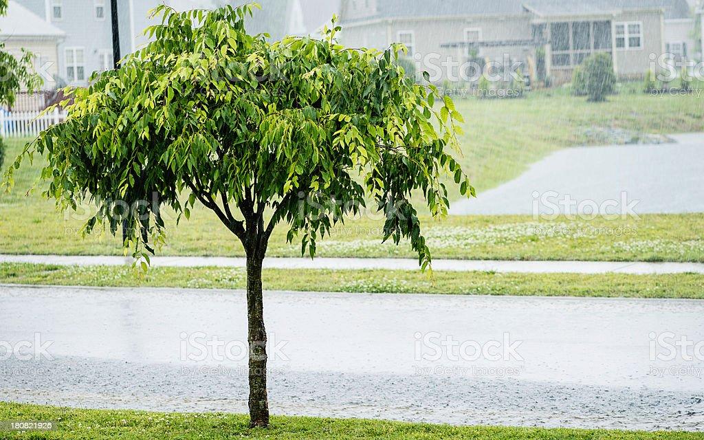 Torrential Rain During Summer Storm stock photo