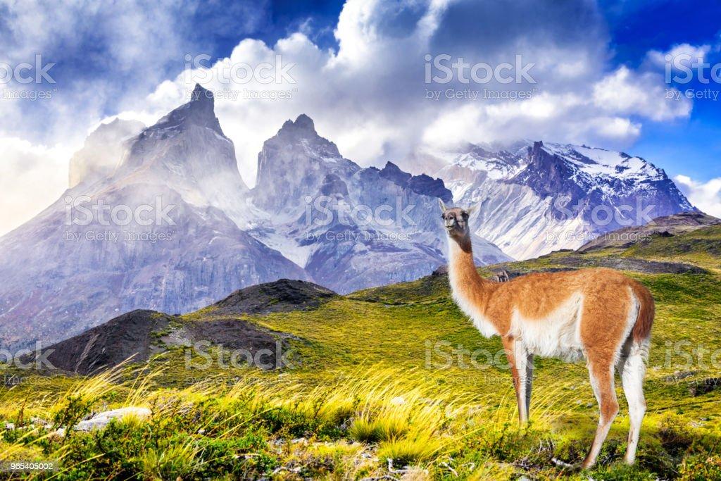 Parc Torres del Paine, au Chili, Patagonie - Photo de Amérique du Sud libre de droits