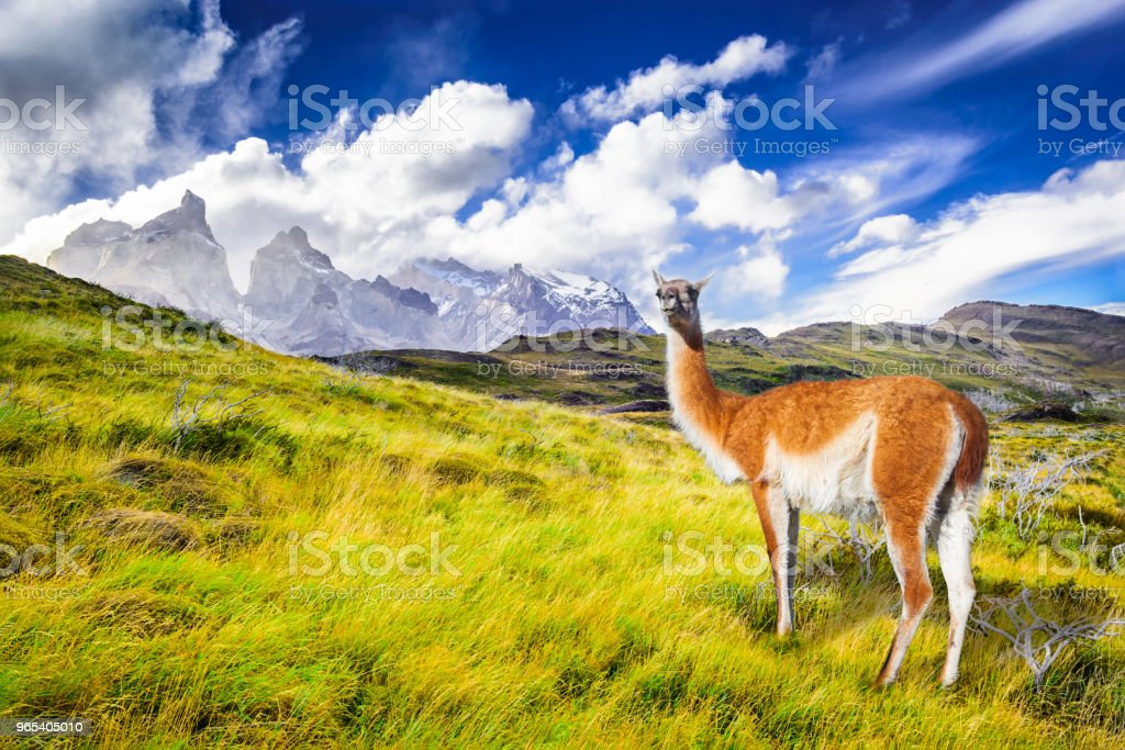 Torres del Paine, Patagonia, Chile royalty-free stock photo