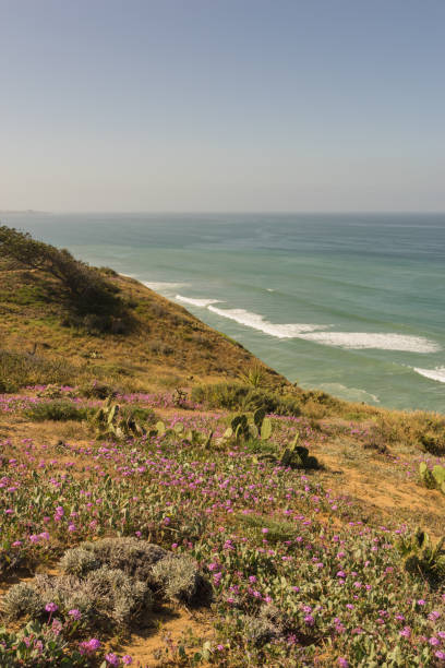 torrey pines state park - nature reserve stock photos and pictures