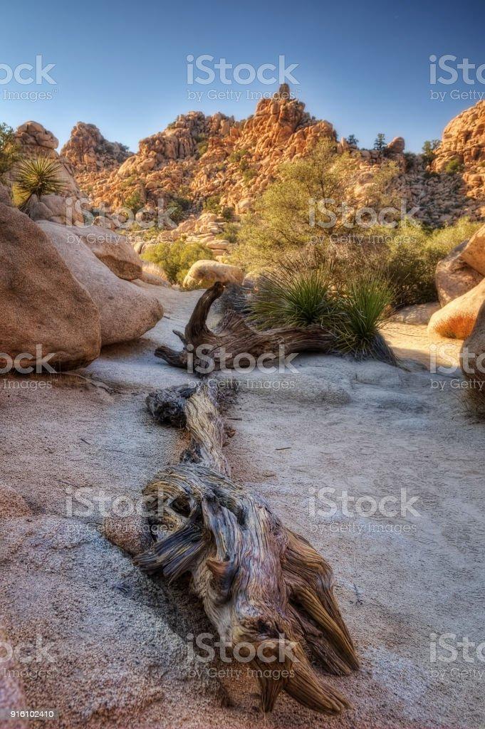 Torrey Pines State Park USA stock photo