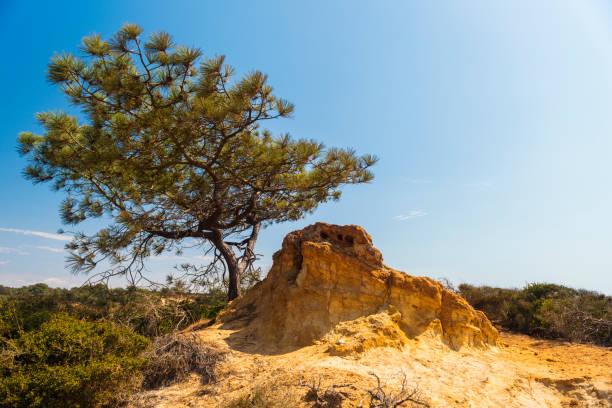 Torrey Pines State Reserve, San Diego – Foto