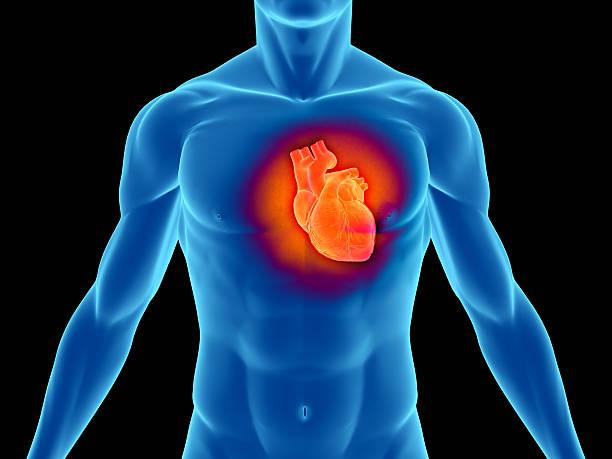 Torso of a man highlighting the heart stock photo