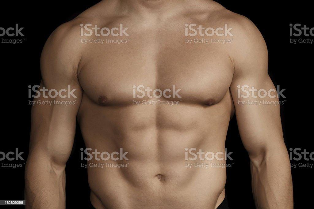 torso stock photo