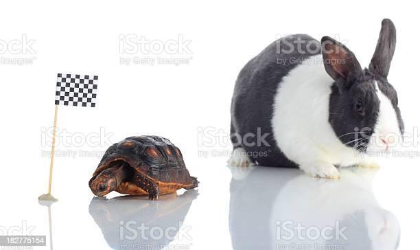 Tortoise and hare at checkered flag focus on turtle picture id182775154?b=1&k=6&m=182775154&s=612x612&h=5pbsanutpc8o5ettaedn6mb1gokhgpevafp4urjkkxk=