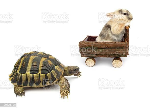 Tortoise and hare story alternative version picture id120526728?b=1&k=6&m=120526728&s=612x612&h=atmreut4dtveb7jnknabaywllzdqhl1gviou0uzwja4=