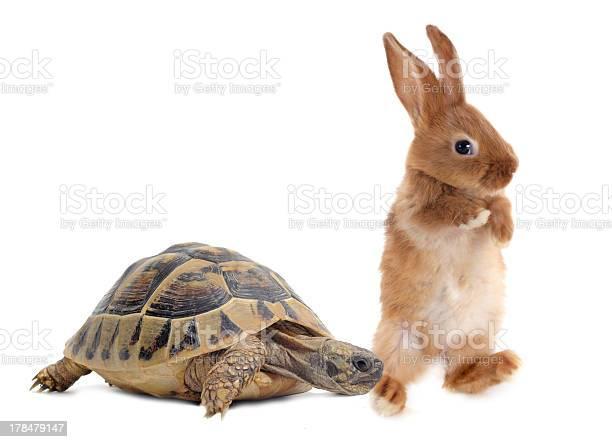 Tortoise and rabbit picture id178479147?b=1&k=6&m=178479147&s=612x612&h=vlrjgmyjvlpqyqpgcvtu7y3d ml1ekkoxpktd8st4dw=