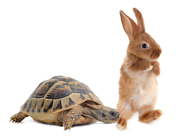 Tortoise and rabbit stock photo