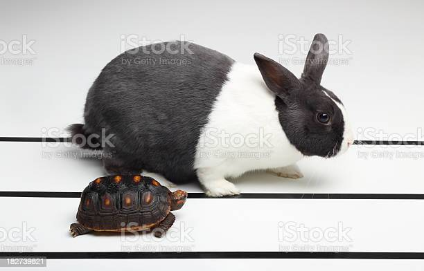 Tortoise and the hare picture id182739821?b=1&k=6&m=182739821&s=612x612&h=qrewyotjscgmcqj51tolqfeniynys0qwczhro2r9elm=