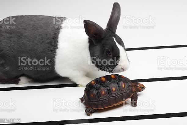 Tortoise and the hare picture id182741590?b=1&k=6&m=182741590&s=612x612&h=4 yhyzuqcqqcvsb92qplpe3o4p yfjiuroxkwpzvuim=