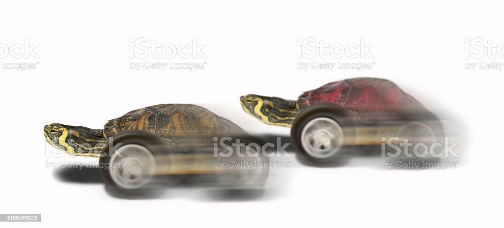 tortoise beating rival stock photo
