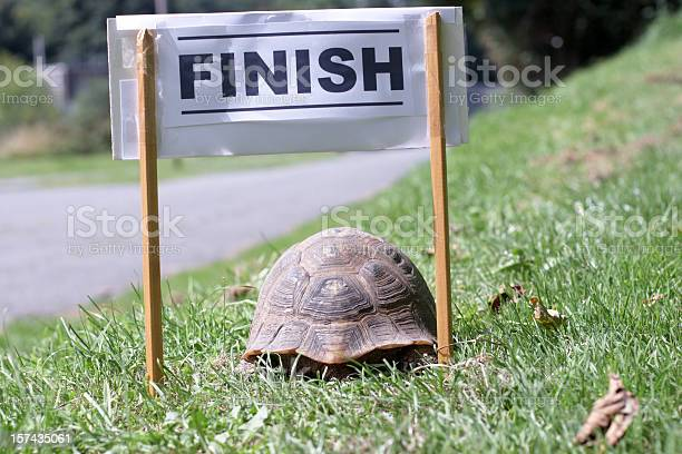Tortoise crossing the finish line picture id157435061?b=1&k=6&m=157435061&s=612x612&h=k9bd03c9lkl1nv yv2jzhcvfq75r1s6ncl4ss4adu8s=