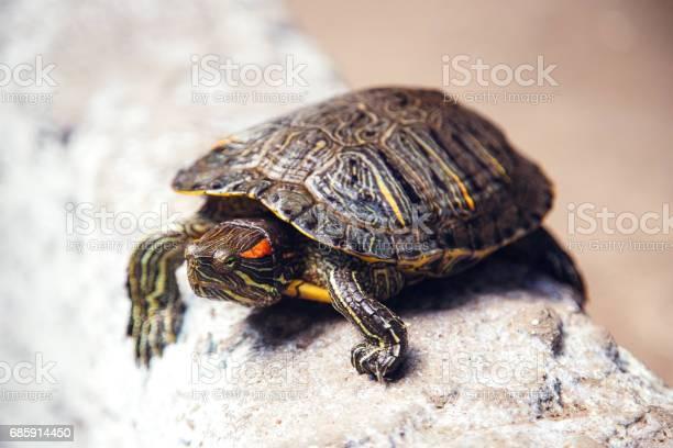 Tortoise escapes picture id685914450?b=1&k=6&m=685914450&s=612x612&h=fb2rjvop4btuy5 i2bcjcwhejrxzyrgc9dfdifa 0am=