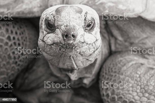 Tortoise face in black white picture id466077950?b=1&k=6&m=466077950&s=612x612&h=va 6q9sky6vmaw0fugy0etquhibltbh6y1os1xy9kkg=