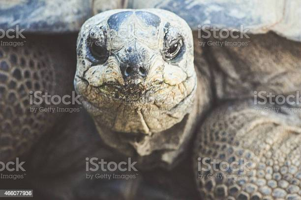 Tortoise face in color picture id466077936?b=1&k=6&m=466077936&s=612x612&h=l6w2iv4 2jrmp7qa 2jyyt2v5gydq5e5aer muf8pze=