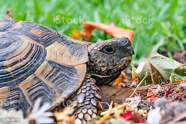 Tortoise in garden picture id478578210?b=1&k=6&m=478578210&s=612x612&h=xdmhfdhtkennpfusumdpektvfkd6qhlxfiqlt0uig10=