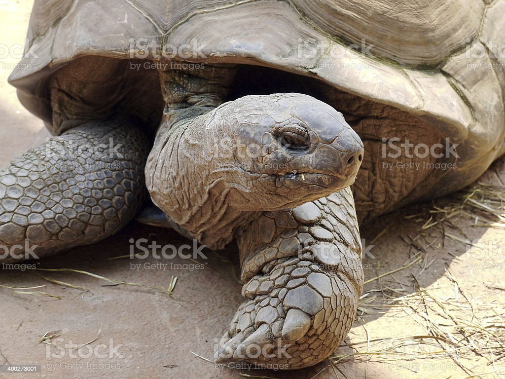 tortoise in nature stock photo