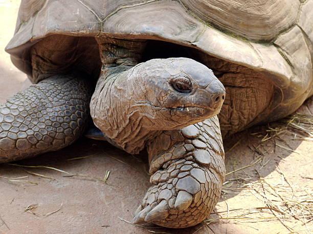 tortoise in nature stock photo