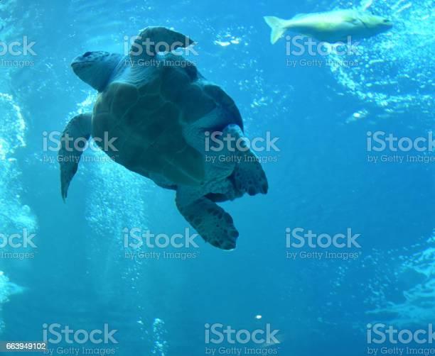 Tortoise in tank picture id663949102?b=1&k=6&m=663949102&s=612x612&h=avun0pdljdejwog1tvn3urcpk7sqssz34fdxlqclxqg=