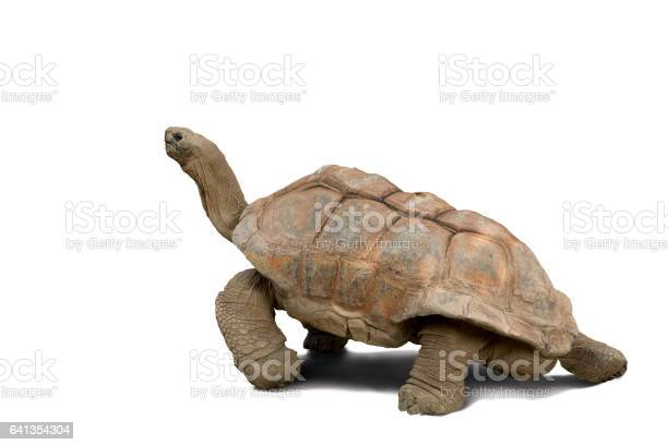 Tortoise isolated against white picture id641354304?b=1&k=6&m=641354304&s=612x612&h=ysxqbbz4pojmgtav5faaxedqem2xc8abhsn4rma866m=