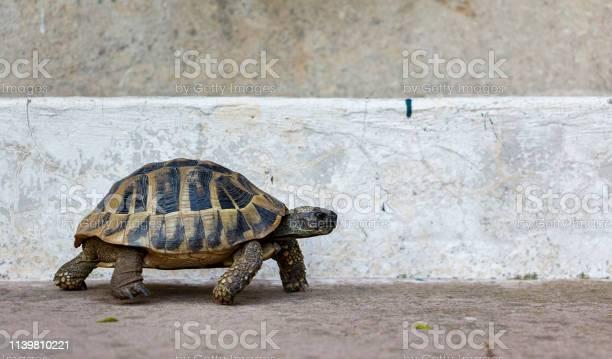 Tortoise on concrete picture id1139810221?b=1&k=6&m=1139810221&s=612x612&h=9 okjlkpgtsv1zue2jd3sskvgjcpdxrmeztiw8nrqb0=