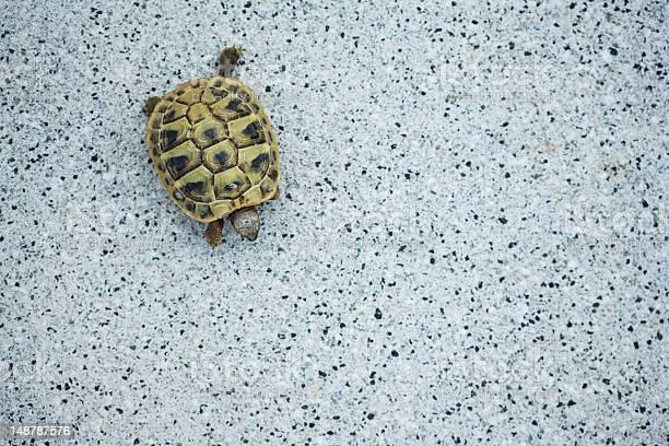 Tortoise on granite picture id148787576?b=1&k=6&m=148787576&s=612x612&h=zxxzbxlrmo9 sa92dfi3ozhmzjaoxdflppdqdahjt7g=