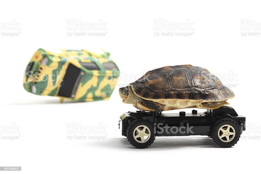 Tortoise on Wheels stock photo