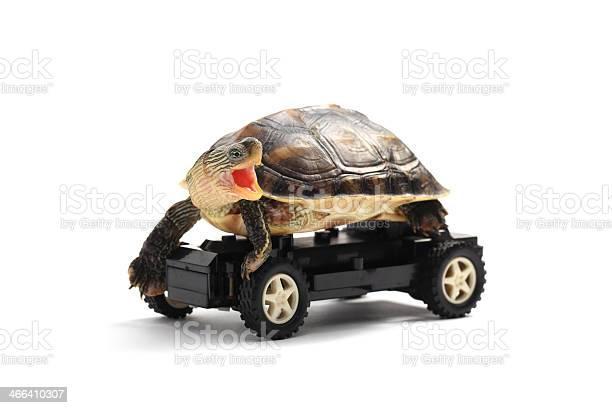 Tortoise on wheels picture id466410307?b=1&k=6&m=466410307&s=612x612&h=xkhbfvjdg29eghdg5dodola9jptwpunah6ckrndw2aa=
