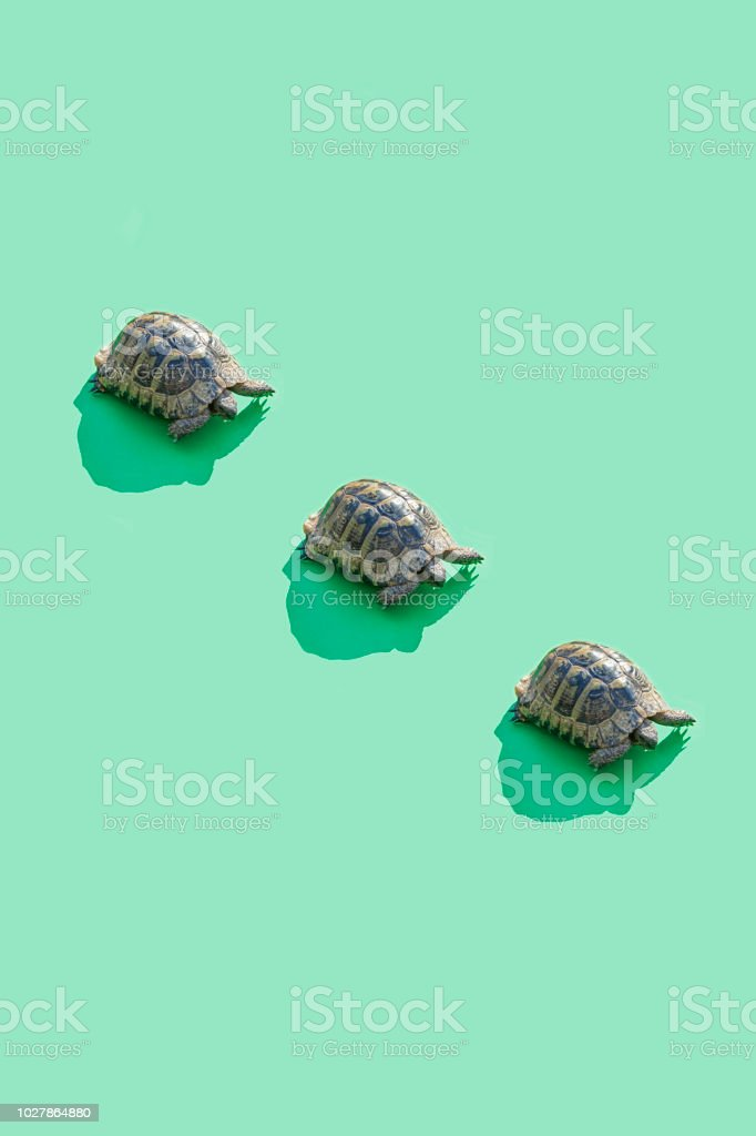 577 Turtle To Color Background Stock Photos, Pictures & Royalty-Free Images  - IStock