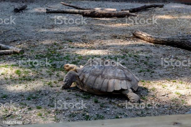 Tortoise picture id1166328453?b=1&k=6&m=1166328453&s=612x612&h=1loxsslgj edon3idf5m0k5d86boqbwc4gsasuqmgry=