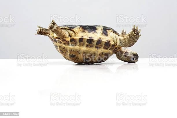Tortoise picture id144362960?b=1&k=6&m=144362960&s=612x612&h=ynh3bevjjcktvbn8trnhncs0 qc b9udjepxu g  wc=
