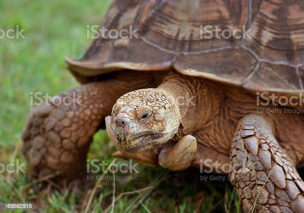 Tortoise picture id169562915?b=1&k=6&m=169562915&s=612x612&h=heiaji5jthah6bu6t3nlrlxs2o5xzklxgnqlrubbhra=