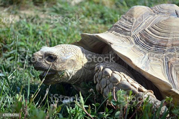 Tortoise picture id470284734?b=1&k=6&m=470284734&s=612x612&h=vhkszswieoicmz11svyngkdtpzwocwrkslfvuosve u=