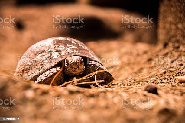 Tortoise picture id506655523?b=1&k=6&m=506655523&s=612x612&h=ooasqa0ft2ez0ynyclj03fx5wbbt61q6z9buayutj2o=