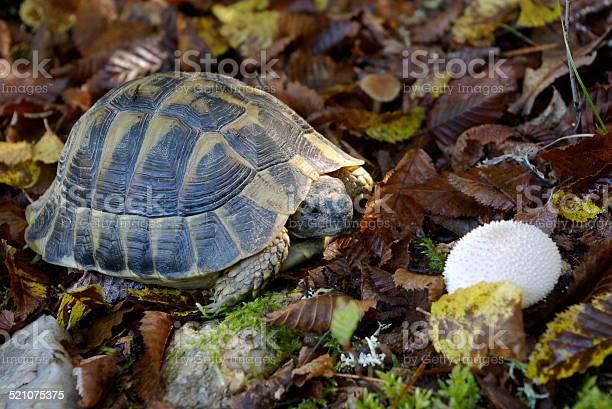 Tortoise picture id521075375?b=1&k=6&m=521075375&s=612x612&h=imfvbw4bq06lbw21flkpuwcq2bmv2pucjnjvolhsqp8=