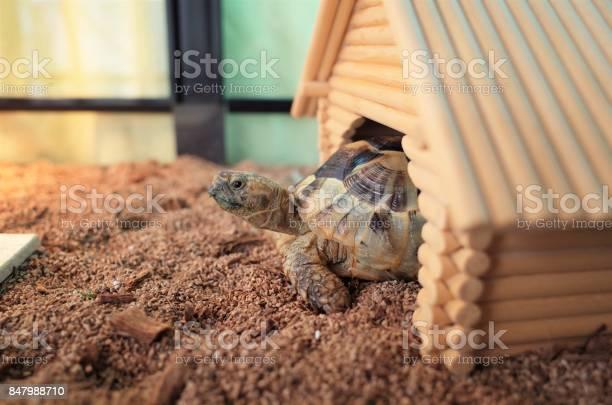 Tortoise picture id847988710?b=1&k=6&m=847988710&s=612x612&h=yhozagifekokmeux47d0fyjppampil2fuyfjwnfvhl4=