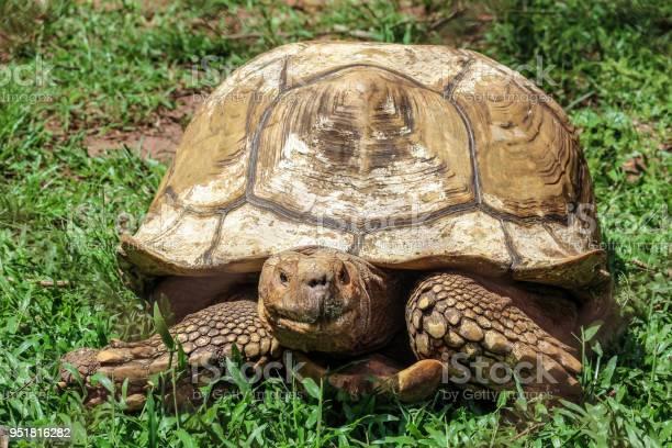 Tortoise picture id951816282?b=1&k=6&m=951816282&s=612x612&h=yuhj9pfk y41jtanaklrbwudtfihpg7dn5dks 9vlne=